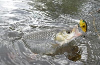 самые лучшие прикормки для рыбалки