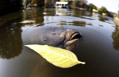 Осенняя рыбалка