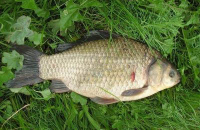Как выглядит рыба