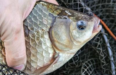Как выглядит рыбка