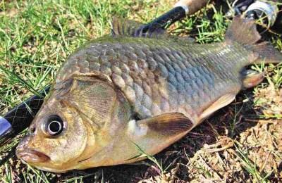 Пример рыбки