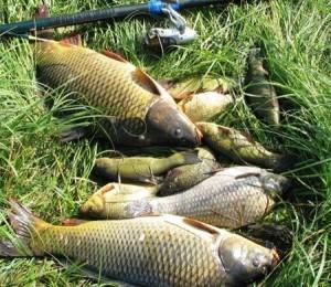 выбор поплавка для ловли карася