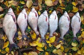 Ловля леща осенью