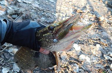 Рыбалка зимой на виброхвост