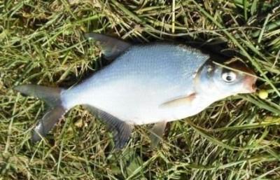 Рыба на траве