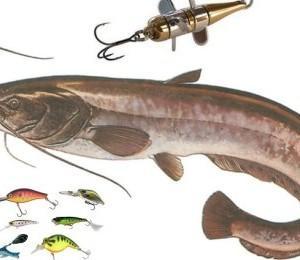 На что словить хищную рыбу