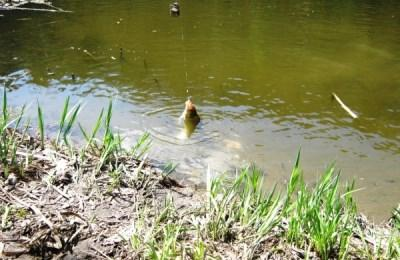 Поимка рыбы