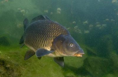 Пример рыбы